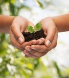 Kobieta wręcza mienie rośliny w ziemi Zdjęcia Stock
