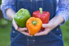 Kobieta wręcza trzymać świeżego warzywa, pieprz Fotografia Stock