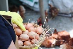 Kobieta wręcza trzymać surowych jajka i słomę w koszu, zbliżenie, używać żółtych handgloves fotografia stock