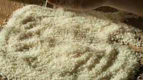 Kobieta wręcza wybierać najlepszy ryż dla gotować, ręki macania adra, zdrowa dieta, zakończenie up zdjęcie wideo