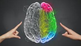 Kobieta wręcza wzruszającą Analytical i Kreatywnie część mózg ilustracji