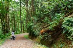 Kobieta wycieczkuje przez lasu fotografia royalty free