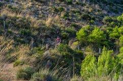 Kobieta wycieczkuje w górach Tramuntana, Mallorca, Baleares, Hiszpania Obraz Stock