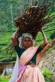Kobieta z chaszcze zdjęcia stock