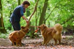 Kobieta z jej psami w lesie Obraz Royalty Free