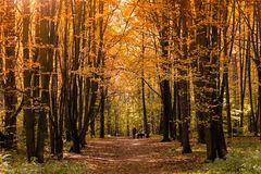 Kobieta z Jej psem w jesień lesie zdjęcia royalty free