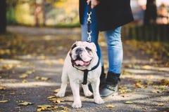Kobieta z jej psem w jesień parku fotografia royalty free