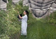 Kobieta z laptopem w jabłczanym sadzie Fotografia Stock