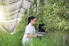 Kobieta z laptopem w jabłczanym sadzie Fotografia Royalty Free