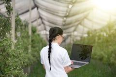 Kobieta z laptopem w jabłczanym sadzie Zdjęcie Royalty Free