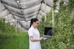 Kobieta z laptopem w jabłczanym sadzie Obrazy Stock