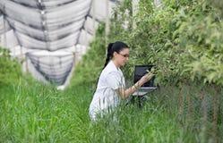 Kobieta z laptopem w jabłczanym sadzie Obraz Stock