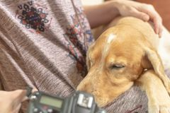 Kobieta z psa spojrzeniami w kamerze 2019 zdjęcia stock