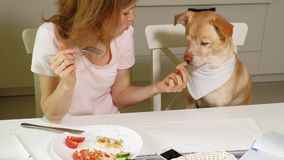Kobieta z psem w kuchni przy sto?em ?niadaniowa przyja?? m??czyzna i zwierz? domowe zbiory wideo