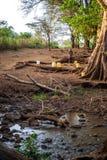 Kobieta z wodnymi zbiornikami wiosną Zdjęcia Stock