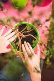 Kobieta zasadza houseplant w garnku zdjęcia stock
