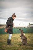 Kobiety żywieniowy wallaby zdjęcia stock