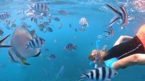 Kobiety apnea snorkeling zbiory wideo