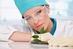 Kobiety biolożka z roślinami Zdjęcia Royalty Free