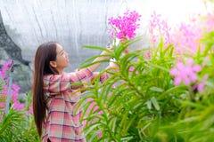 Kobiety ciie różowe orchidee ogród dla sprzedaży fotografia royalty free