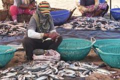 Kobiety cleaning ryba przed suszyć Obraz Stock