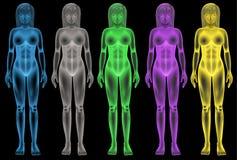 Kobiety coloured bodies ilustracji