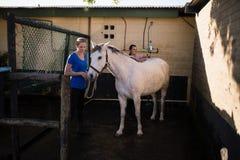 Kobiety czyści białego konia przy stajnią Obrazy Stock