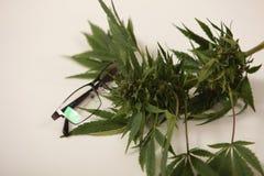 Kobiety doktorski mienie marihuana leaf i oliwi alternatywna wanny bambusa biloba rzeczy ginkgo leków, tray w spa obrazy royalty free