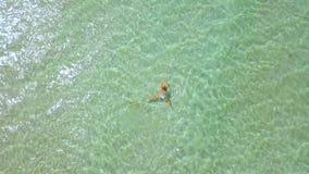 Kobiety dopłynięcie w turkusowej wodzie morskiej Odgórnego widoku kobiety kąpanie w przejrzystej wodzie morskiej na raj plaży ant zbiory