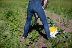 Kobiety działania ogród z motyką Zdjęcia Royalty Free