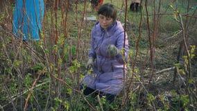 Kobiety działanie uprawiać ogródek zbiory wideo