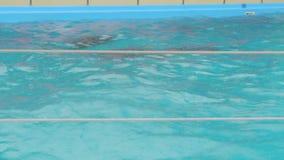 Kobiety I dziecka delfin W basenie zdjęcie wideo