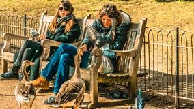Kobiety karmienia kaczki Obrazy Stock
