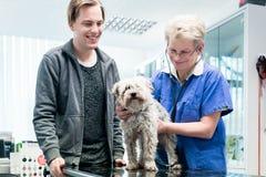 Kobiety lekarka egzamininuje psa obrazy stock