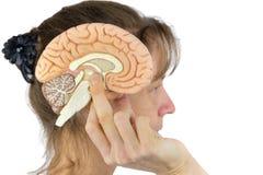 Kobiety mienia hemisfery model przeciw głowie na bielu fotografia royalty free