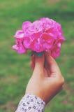 Kobiety mienia menchii hortensi kwiatu bukiet w jej ręce obrazy royalty free