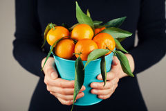 Kobiety mienie w ręk mandarynkach z zielonymi liśćmi lub tangerines, rocznika styl obrazy royalty free