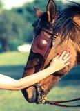 Kobiety nacierania horse& x27; s głowa zdjęcia stock