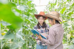 Kobiety nauki asystent, Rolniczy oficer fotografia royalty free