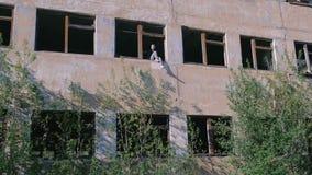 Kobiety obsiadanie na okno zniszczony kondygnacja budynek z wiele łamanymi okno zbiory