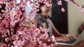Kobiety obsiadanie przy biurkiem i działanie przy laptopem Dekoracyjny Sakura blisko kobieta zbiory wideo