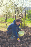 Kobiety obsiewania cebule w organicznie jarzynowym ogródzie Zdjęcie Stock