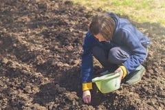 Kobiety obsiewania cebule w organicznie jarzynowym ogródzie Obraz Stock
