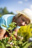 Kobiety ogrodniczka bierze opiekę ogród obrazy royalty free