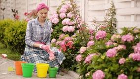 Kobiety ogrodniczka jest ubranym gumowe rękawiczki dla zasadzać wiosna kwiaty w barwionych garnkach Kobiety ogrodniczka dba, kopi zbiory