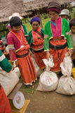Kobiety Palong grupa etnicza zbiera chili pieprze w polach Zdjęcie Stock