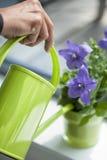 Kobiety podlewania purpur kwiat w jej domu zdjęcie stock
