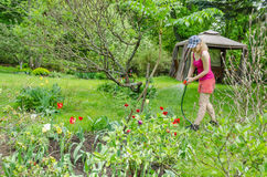 Kobiety podlewania tulipan z natryskownicą na wiosna dniu Zdjęcie Stock