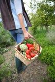 Kobiety przewożenia kosz świeżo zbierający warzywa zdjęcia royalty free