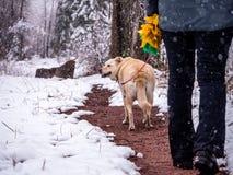 Kobiety & psa odprowadzenie w Spada śniegu Fotografia Stock